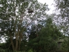 traefaeldninglift_0021