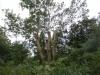 traefaeldninglift_0026