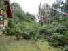 traefaeldninglift_0035