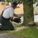 Alle slags træer uanset størrelse fælles af marielyst træfældning