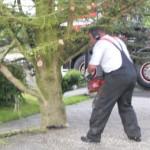 Træet holdes af kran