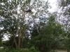 traefaeldninglift_0022